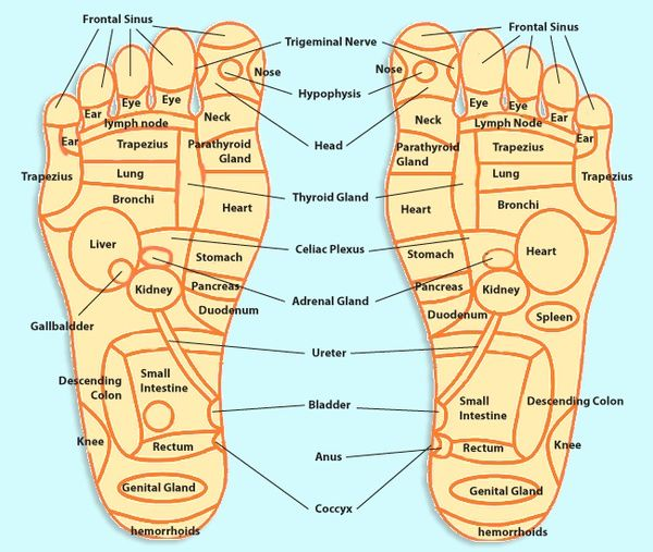 Foot reflexology chart to map sole zones and organs |Acupressure Points Chart Toes
