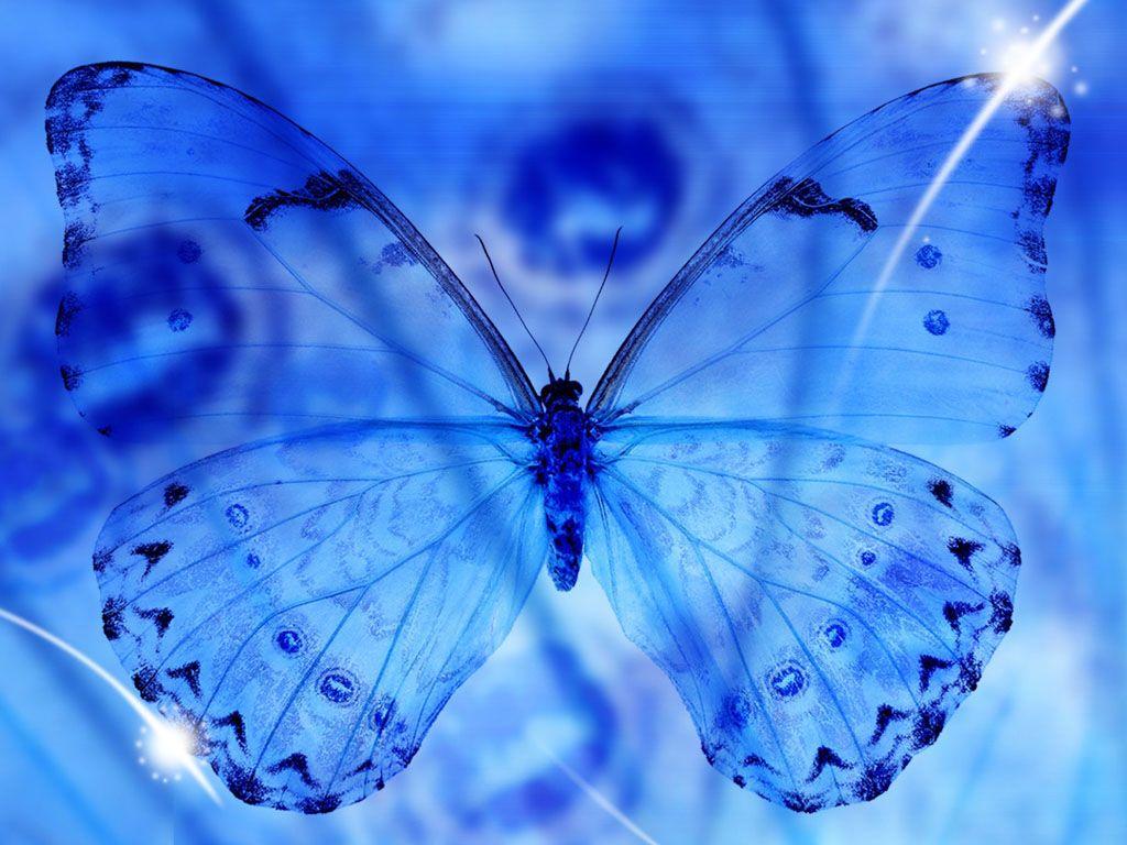 Beautiful Blue Butterfly Macro Wallpaper Wallpaper Butterfly