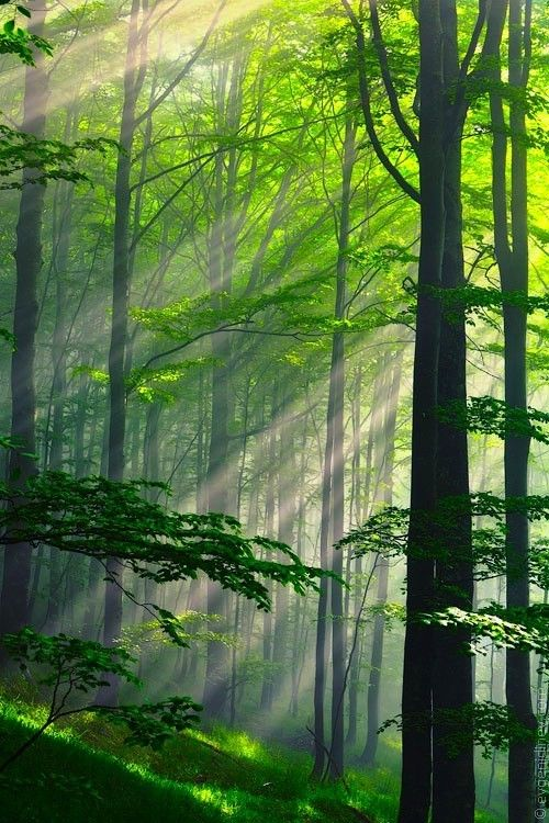 Sun Rays Through The Green Trees Mmm Nature Forest With Images Beautiful Nature Nature Photography Beautiful Landscapes