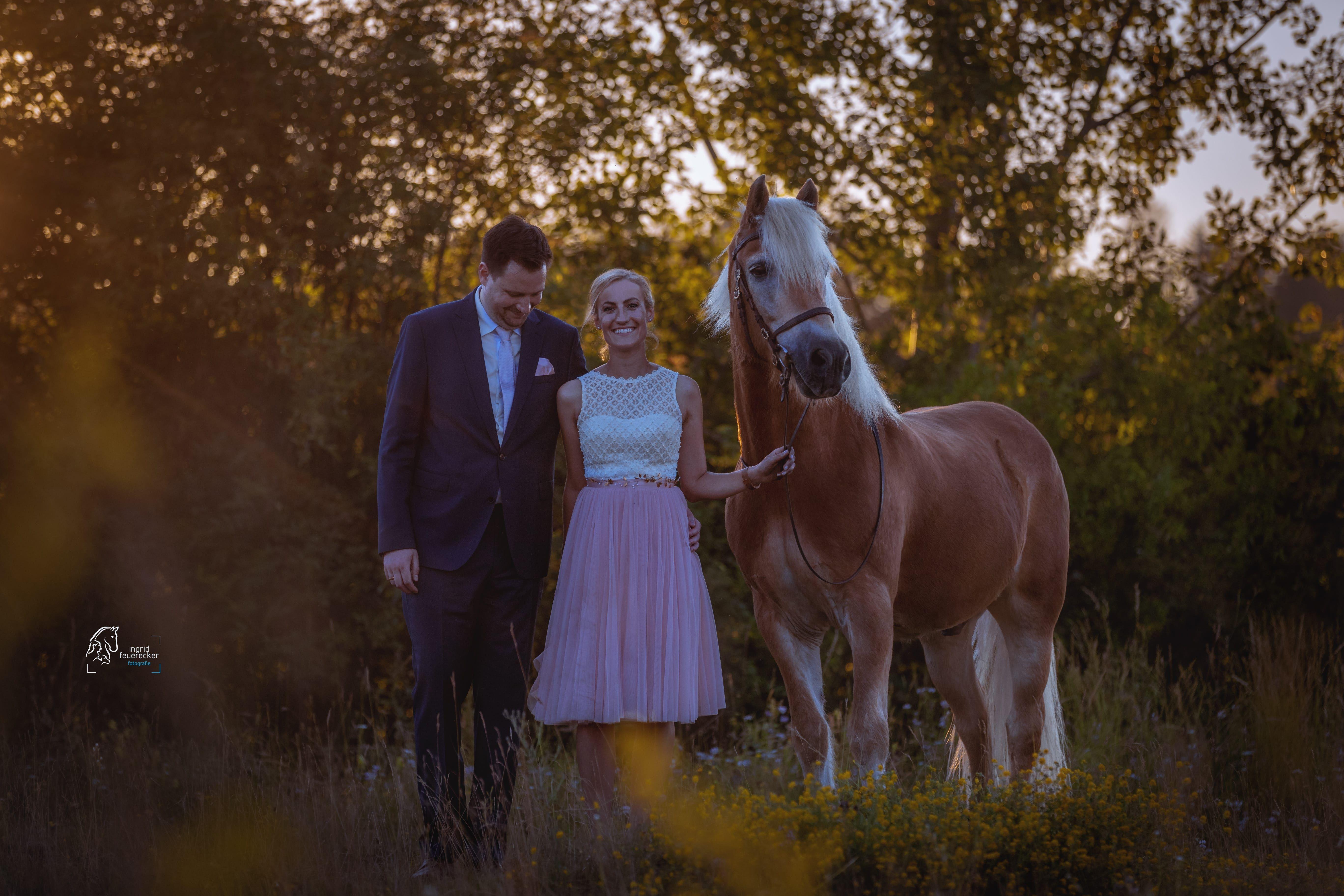 After Wedding Mit Pferd Das Brautpaar Mit Seinem Haflinger Fotoshooting Nach Der Hochzeit Ingrid Feuerecke Tierfotografie Pferde Fotografie Pferdefotografie