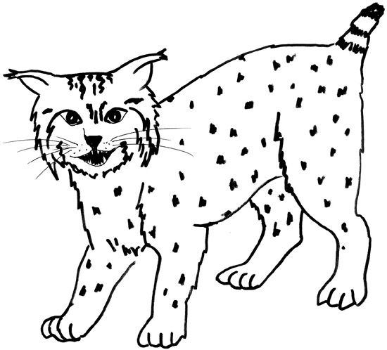 Baby Bobcats Coloring Pages
