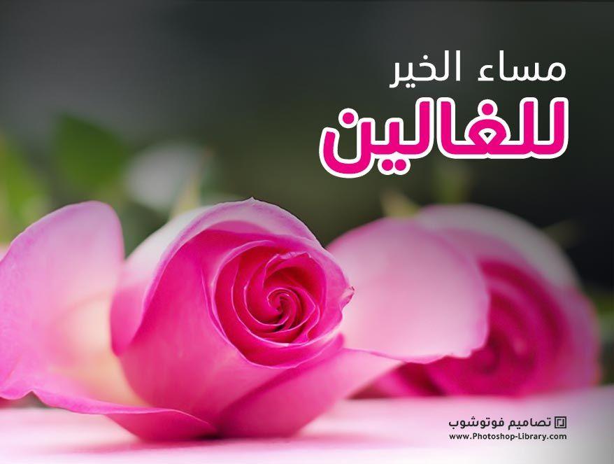 صور مساء الخير للغالين 2020 بطاقات تهنئة مسائية للحبايب للاهل للاصدقاء Flowers Plants Rose