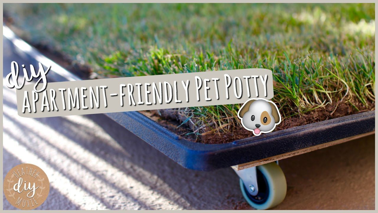 how to potty train your guinea pig