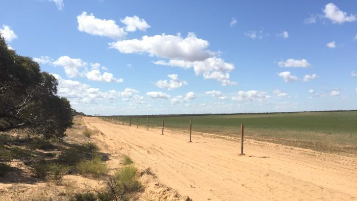 A parcel of native vegetation has been fenced off from crops and cattle in the Victorian Mallee, Australia. To create an enviromental corridor.
