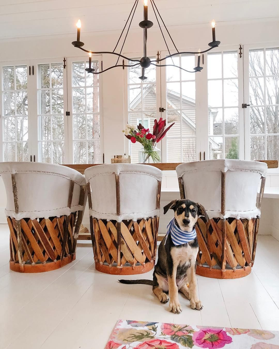 cute pup our sawyer chandelier