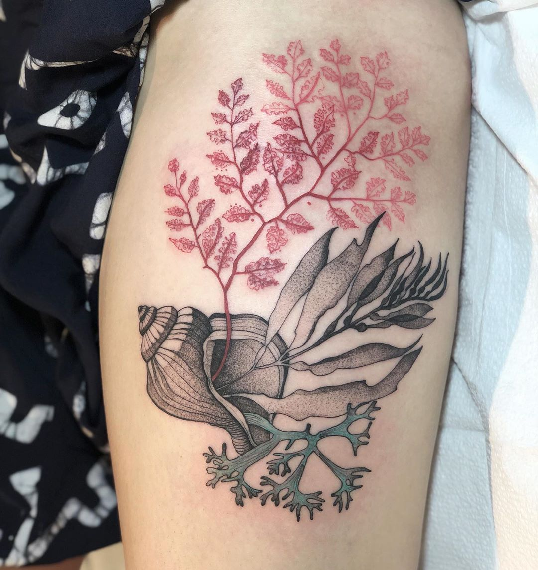 "Tattooer, Wroclaw, Poland on Instagram: ""Seaweed&shell 💚  #seaweed #plants #shell #ocean #life  #ink #illustration #graphic #dzolama #studiotattoo"""