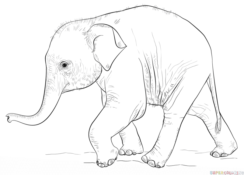 How To Draw A Baby Elephant Step By Step Drawing Tutorials Kid