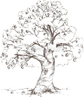 Hand-drawn apple tree drawn in loose, sketchy style. XL jpg ...