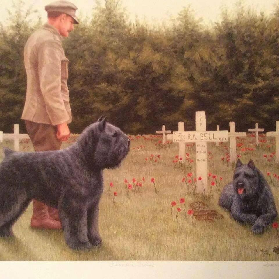 Pin By Harry Jackson On Bouviers Bouviers Des Flandres Dogs