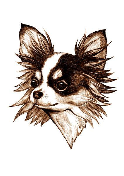 Illustrationen Chihuahua Langhaar Digitaldruck Ein