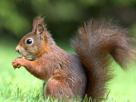 صور عن الحيوانات طبيعة الحياة البرية Animals Squirrel Animal Photo