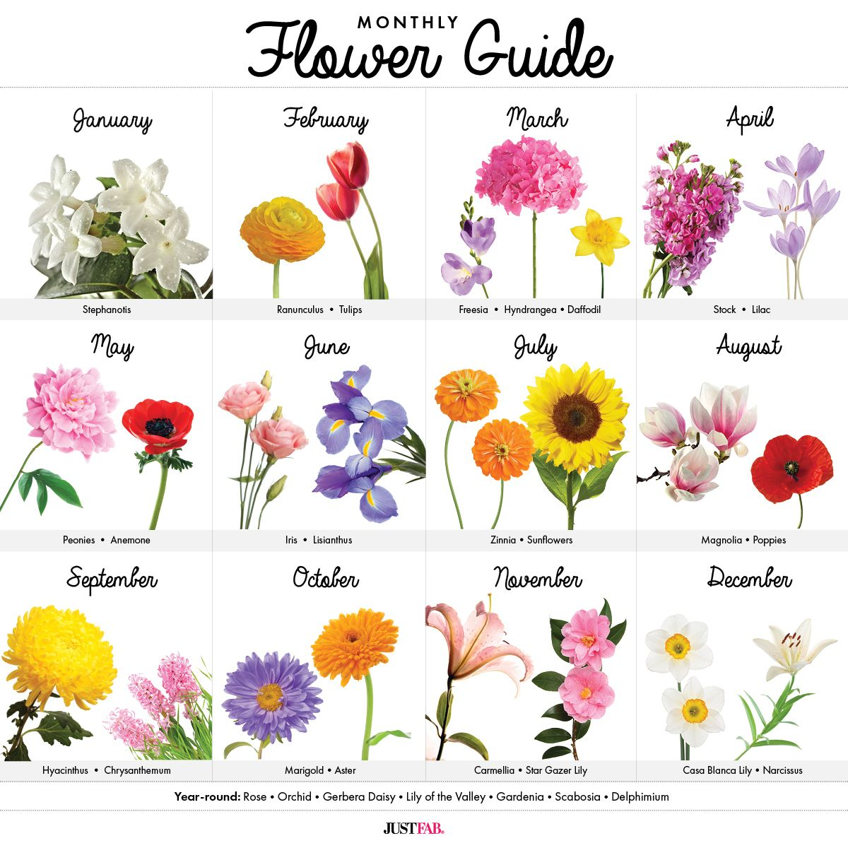 A Visual Guide to Wedding Flowers by Month Birth flowers