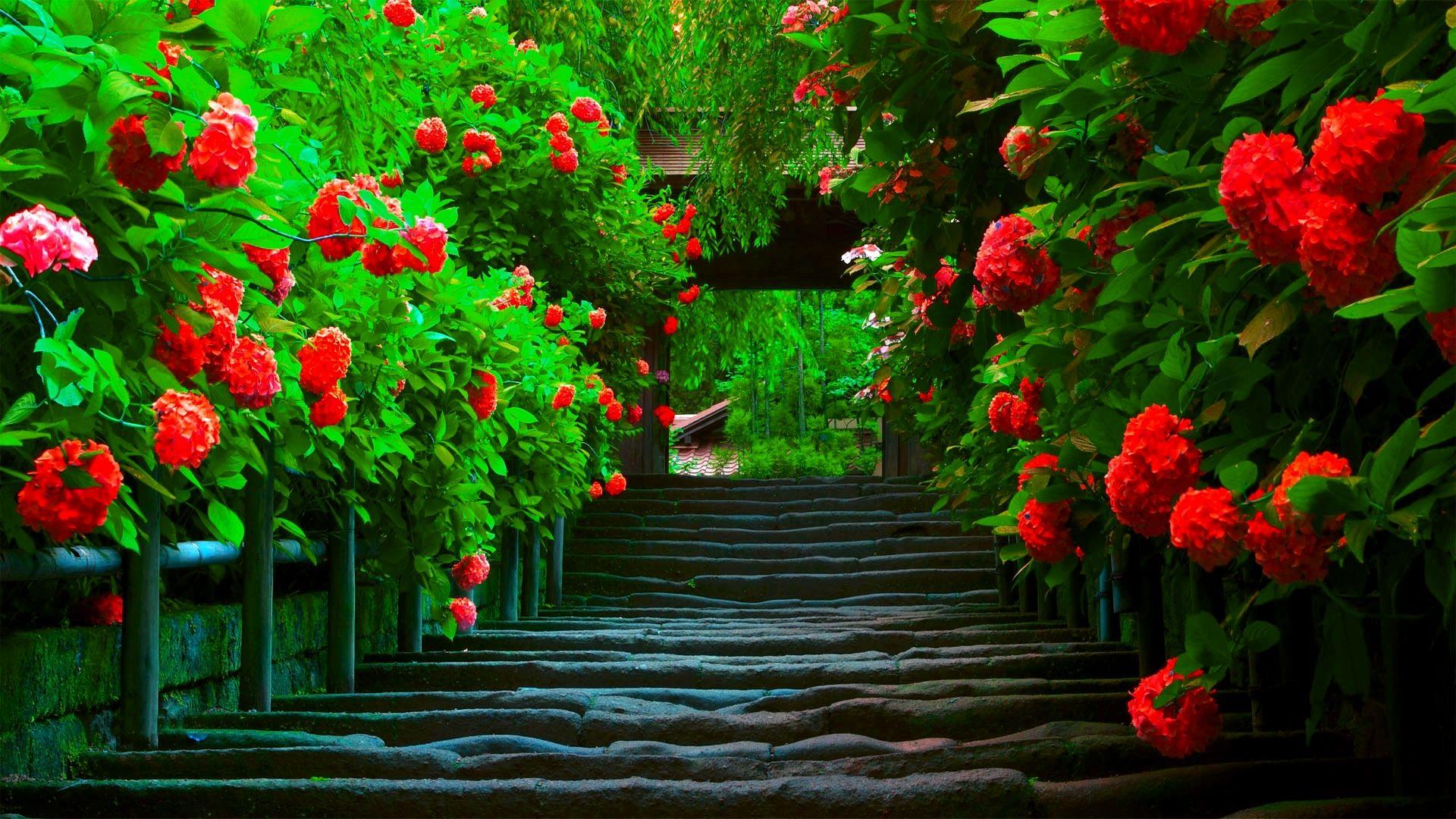 пейзаж из роз фото помоет