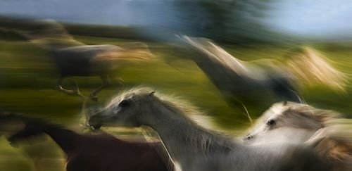 The Spirit of the Horse – Photography by Milan Malovrh