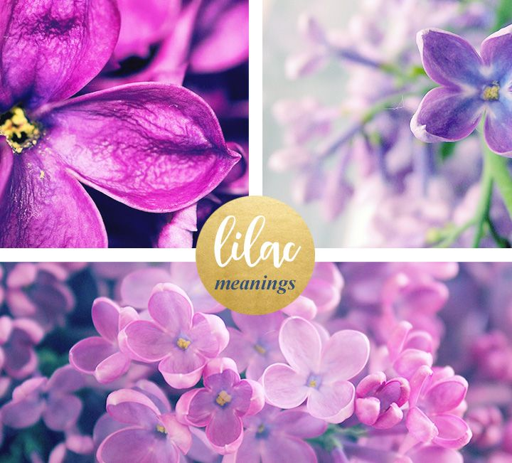 Lilac Meaning And Symbolism Ftd Com Flower Meanings Color Symbolism Lilac