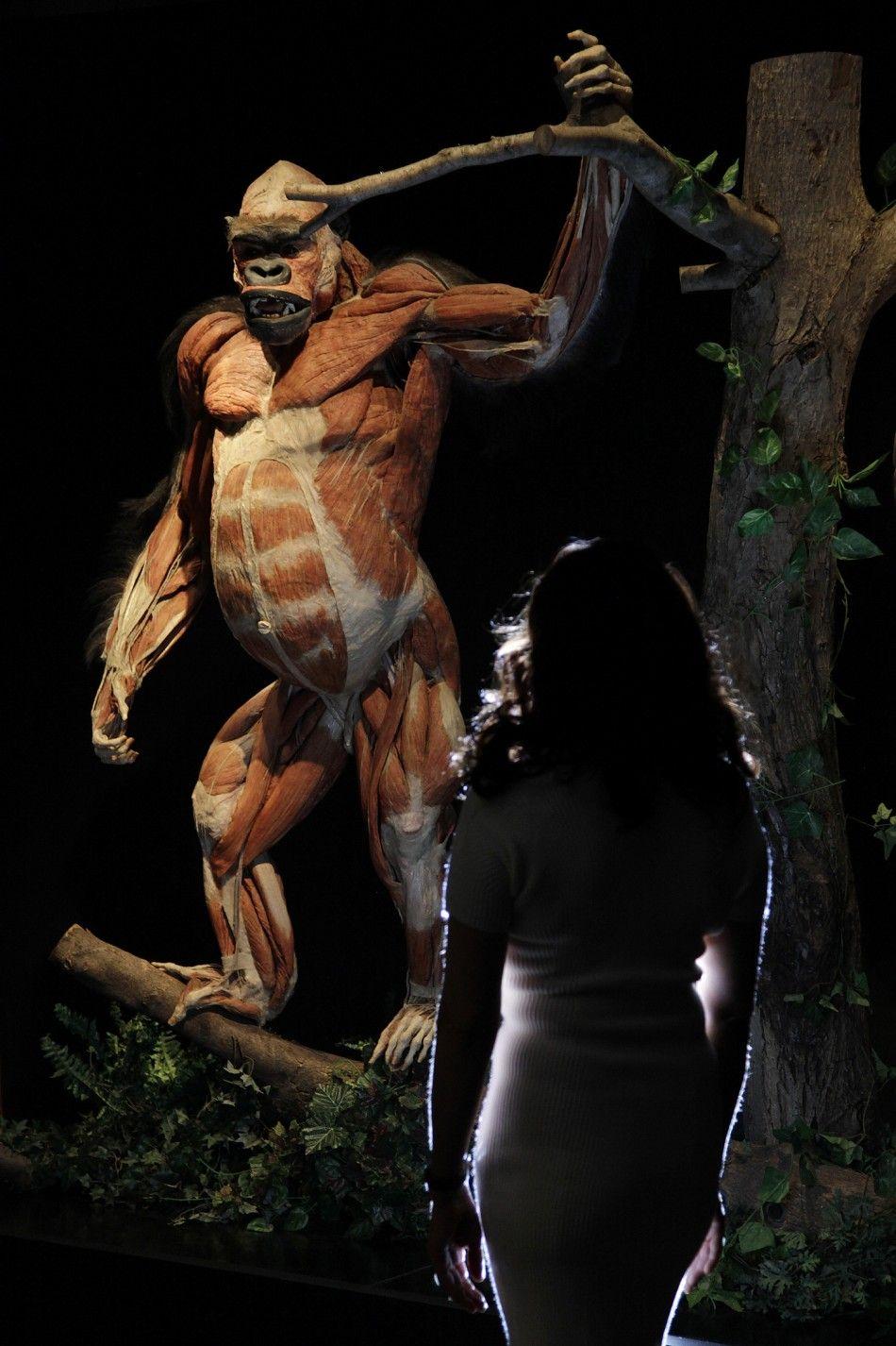King Dead Kong by Gunther von Hagen... #gunthervonhagens #bodyworlds ...