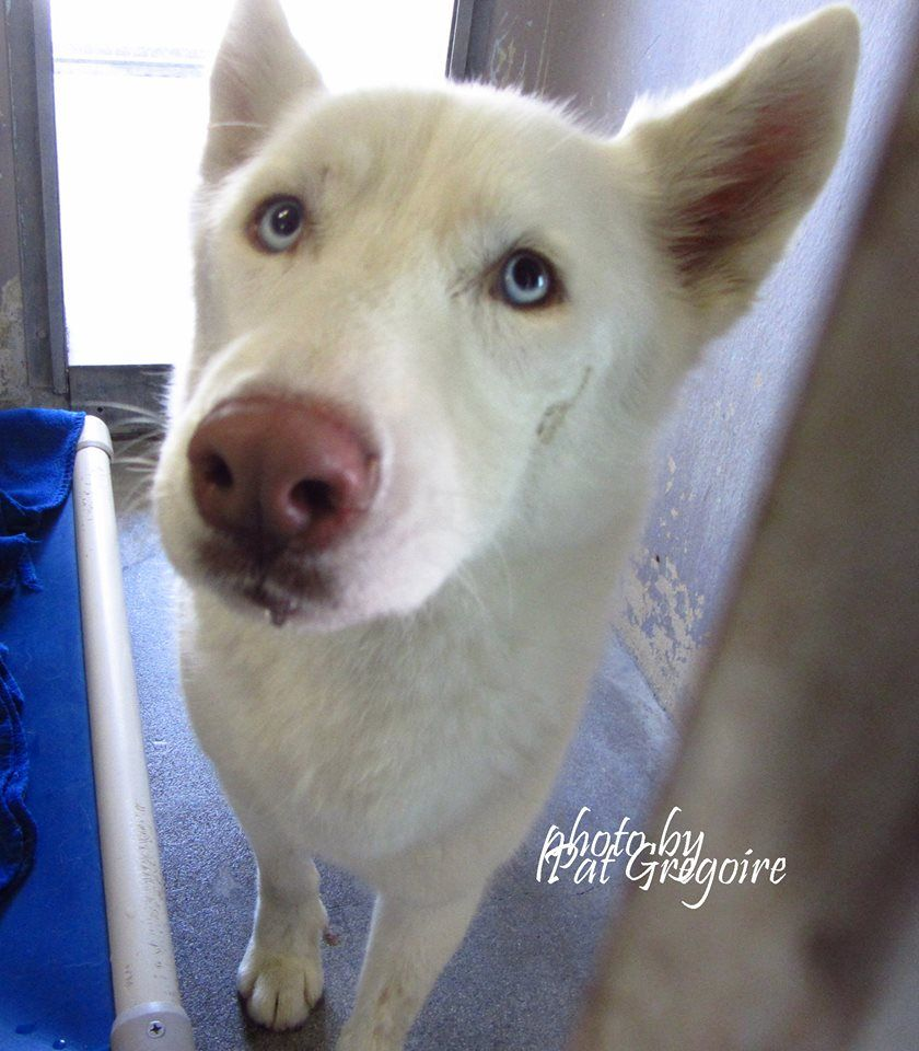 White Brick Baldwin Park S Design: A4872325 My Name Is Glacier. I Am A Friendly Male White