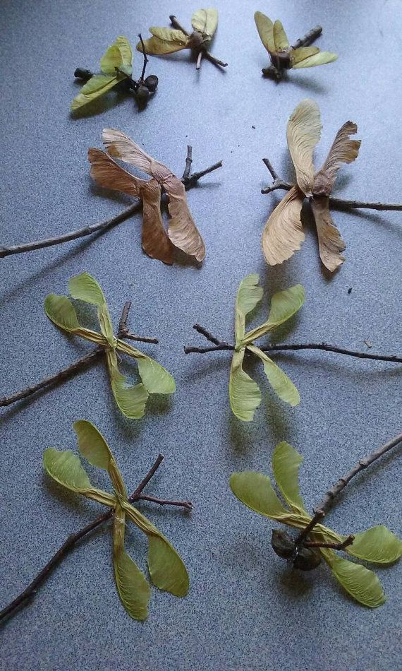 Natural Decor / Twig Art / Dragonfly / Fairy Garden Accessory / Insects /  Stick Bugs
