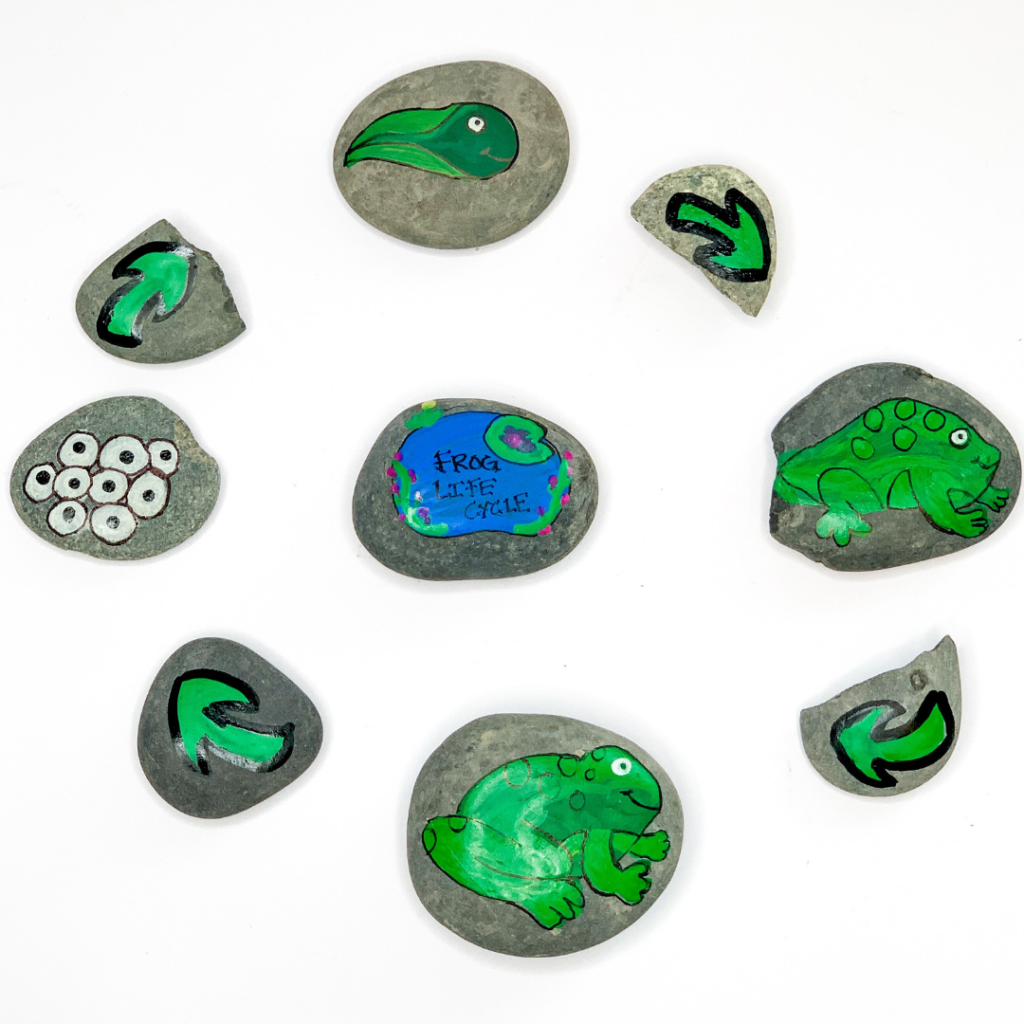 Life Cycle Of A Frog Painted Rocks