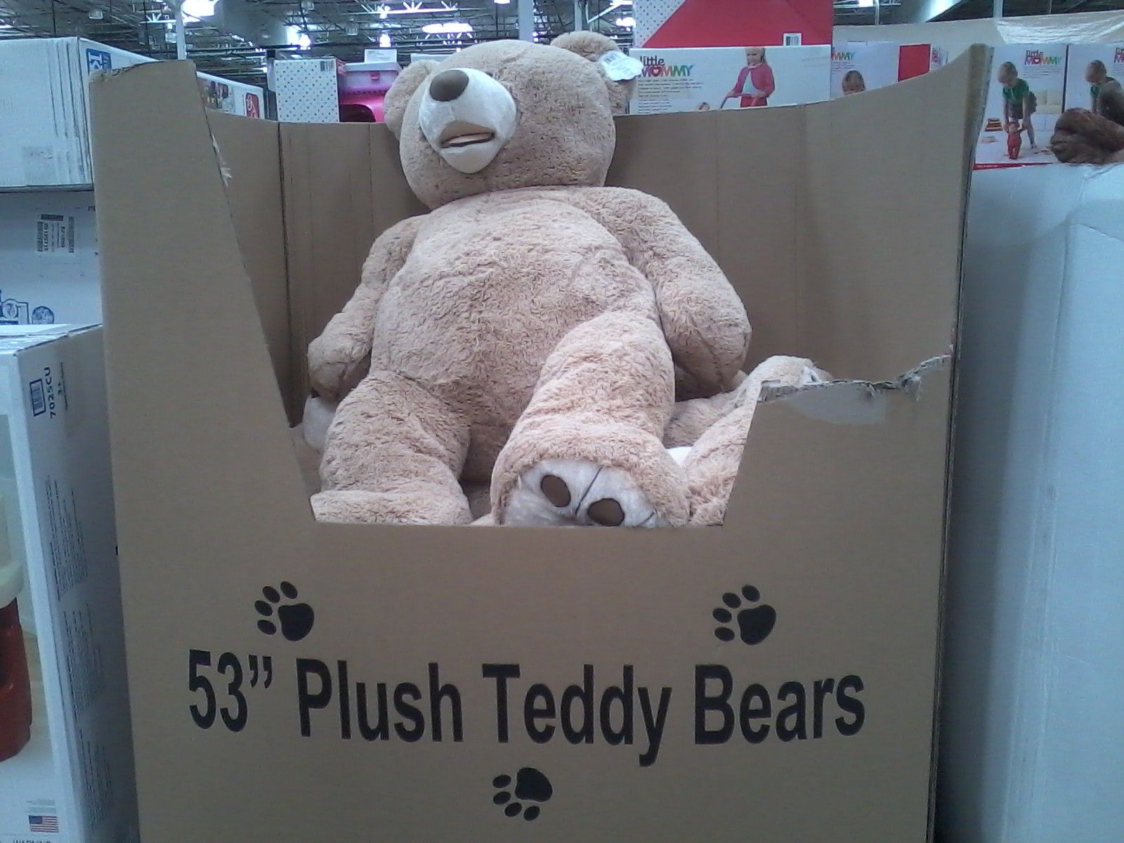 Giant 53 inch teddy bears at Costco I want one