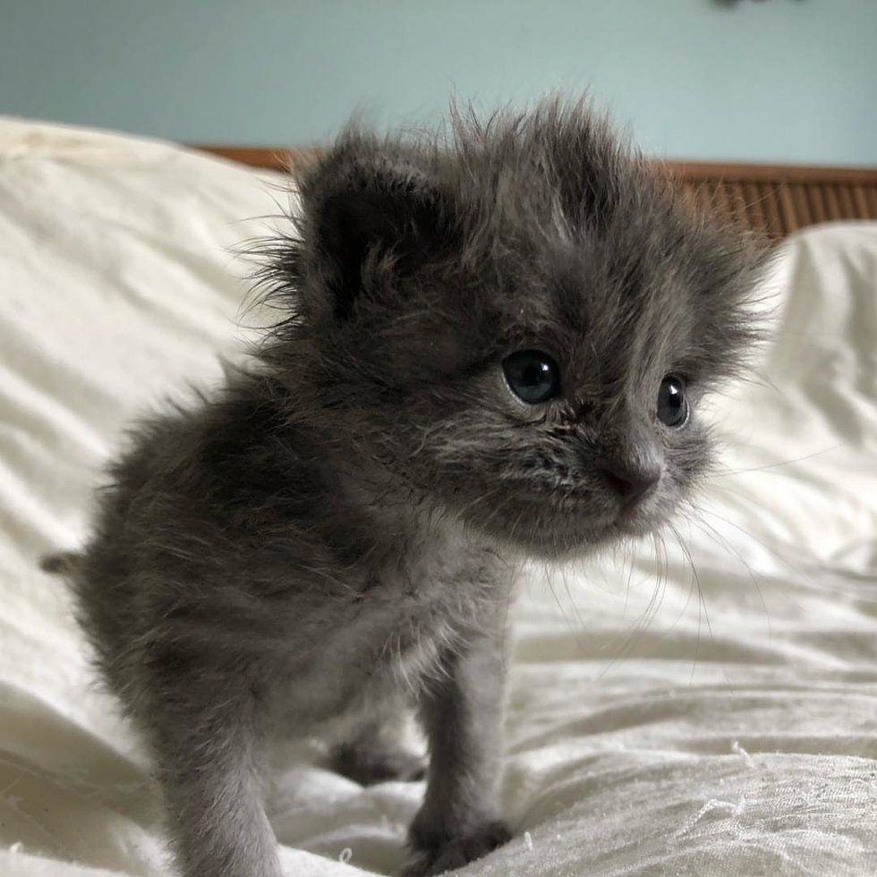 Kitten Found All Alone Just Days Old Bounces Back And Grows A Fluffy Hairdo Love Meow Kitten Meowing Pets Kittens Cutest
