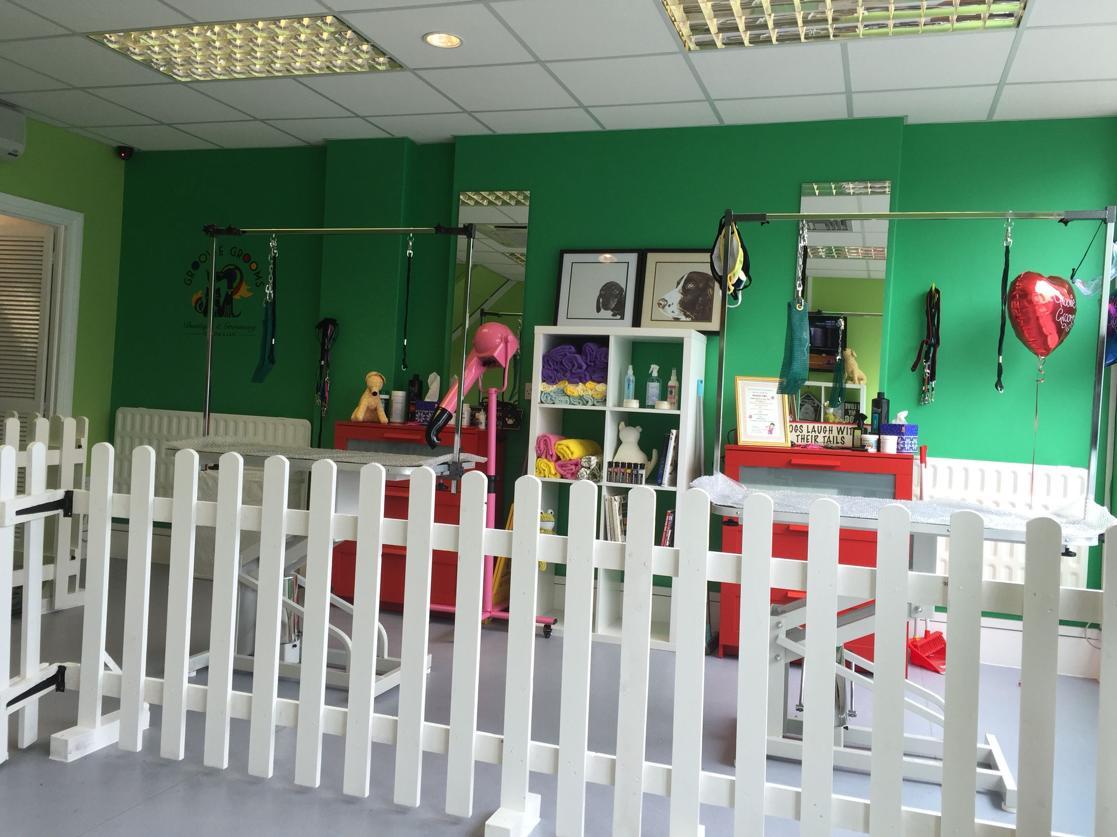 My new salon groovie grooms boutique and grooming for dogs and cats my new salon groovie grooms boutique and grooming for dogs and cats in london solutioingenieria Image collections