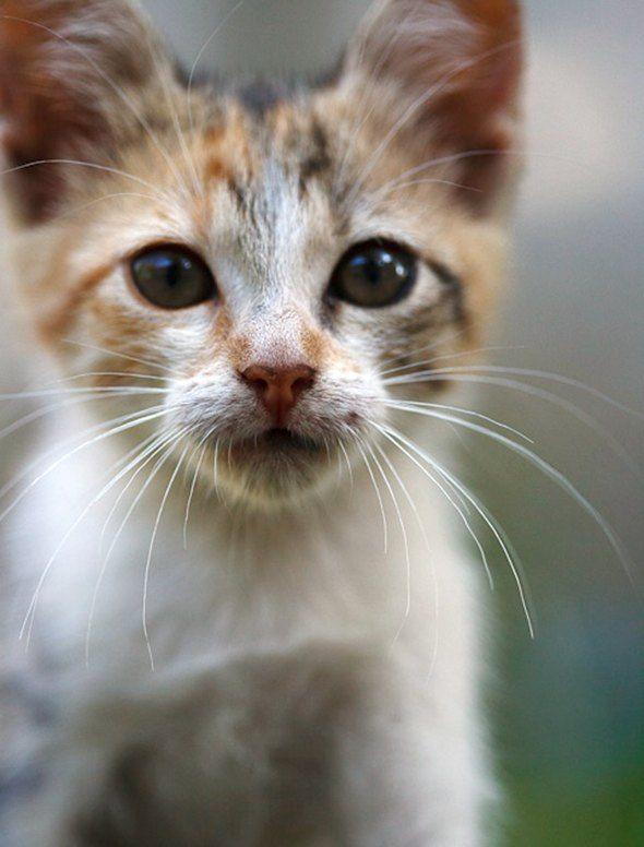 Mitzi [3]  kitten