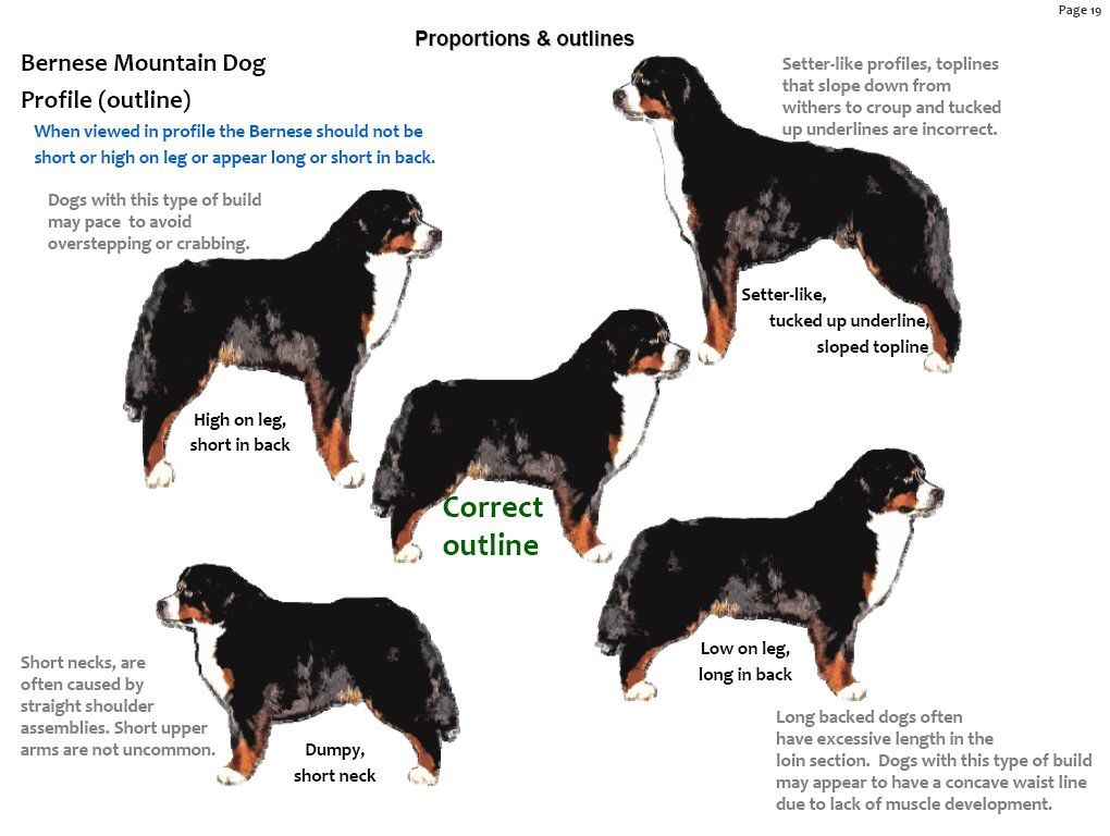 Bernese Mountain Dog Image By Denice Hove On Berner Love Bernese