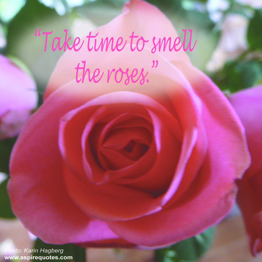 Take Time To Smell The Roses Quote: Do You Take Time To Smell The Roses? Www.aspirequotes.com