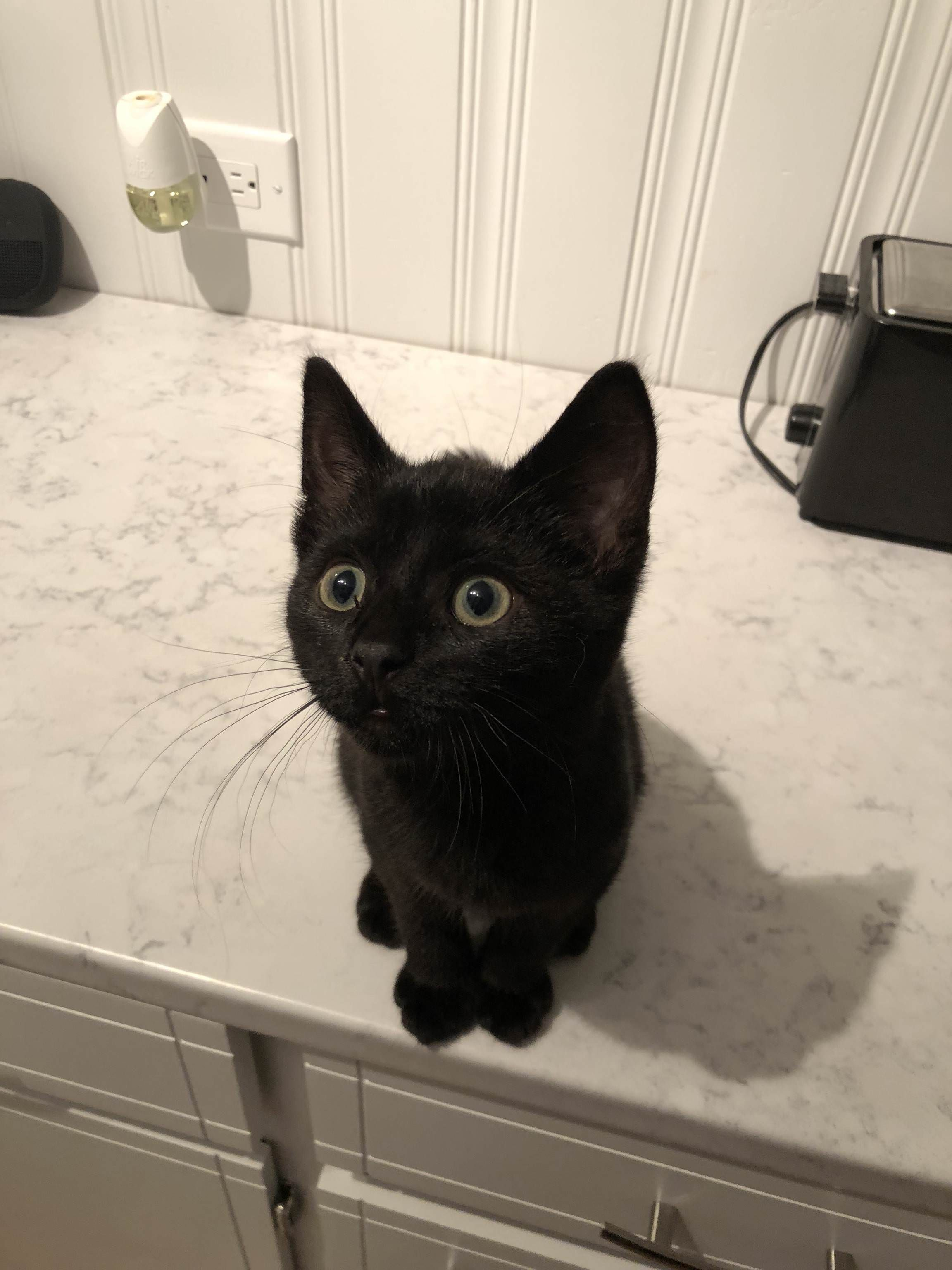 My New Furbaby Black Cats Rock Cats Crazy Cats