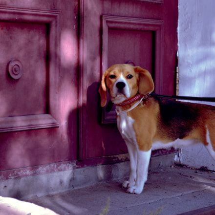 dark martingale dog collar dogsandcouches