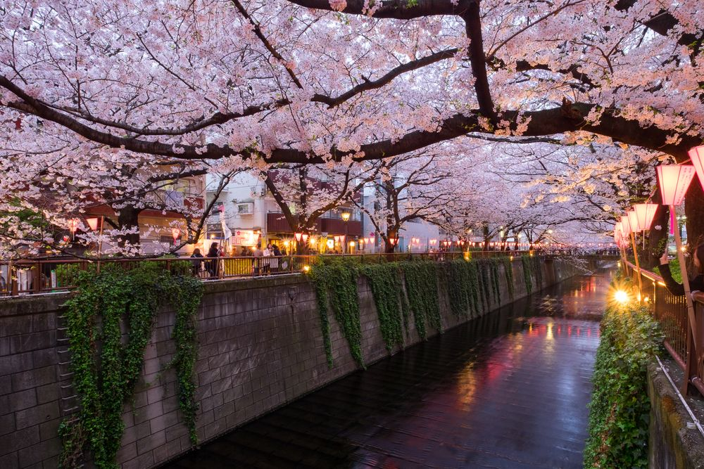 Ueno Park Chiba 17 Spots To View Cherry Blossoms Around Tokyo Places To See Best Travel Guides Cherry Blossom Japan