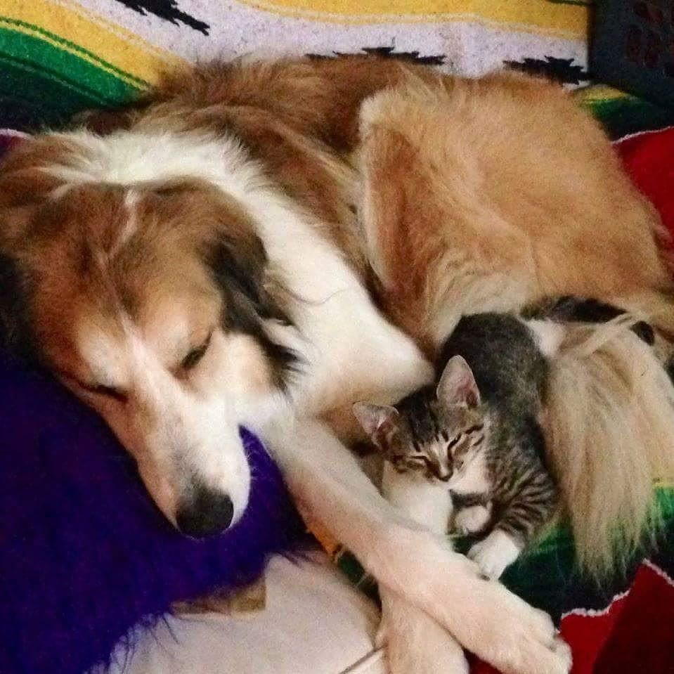 Happy National Cat Day! TDL TheDogLiberator adopted