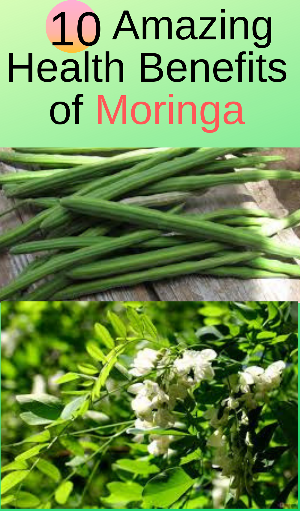 Health benefits of Moringa, Moringa health benefits, Moringa