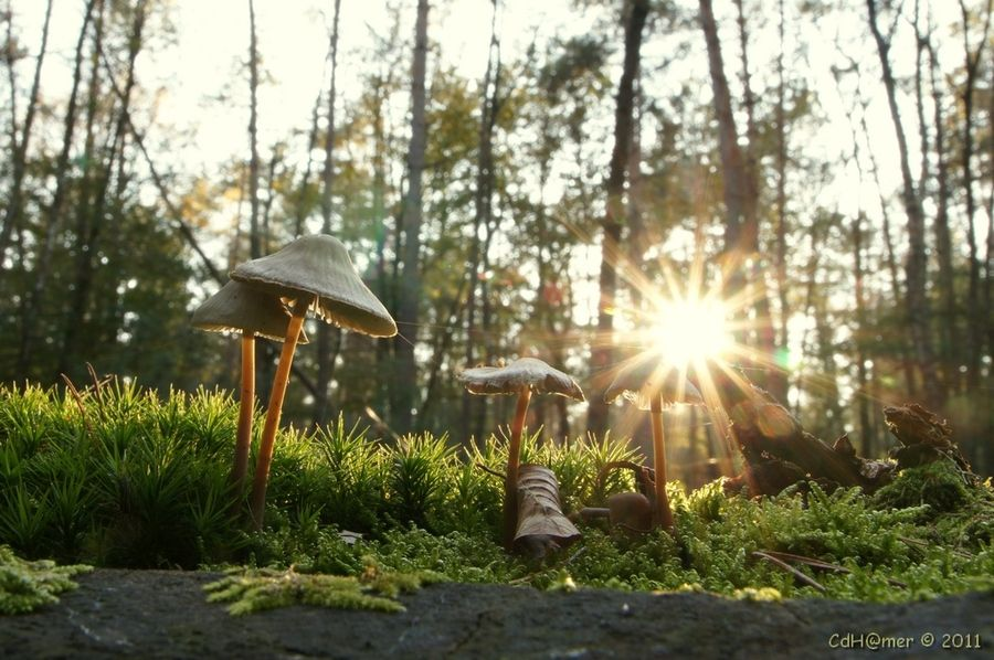 Fungi in the sun by Cor de Hamer, via 500px
