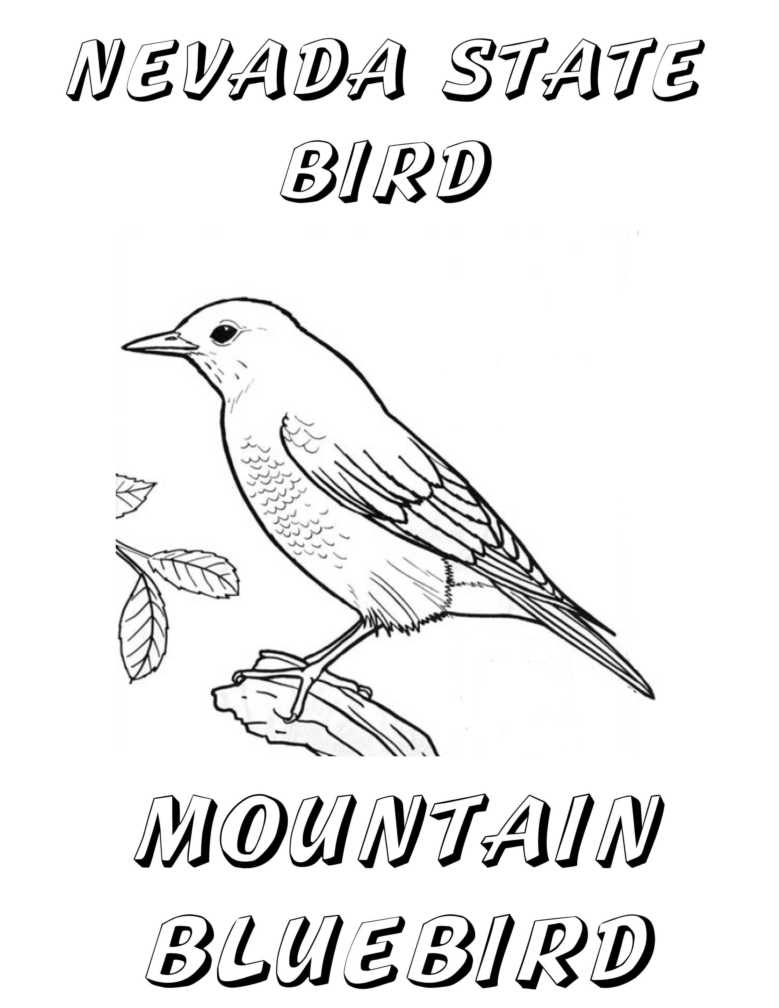 Nevada State Bird Coloring Page | School Project Ideas | Pinterest