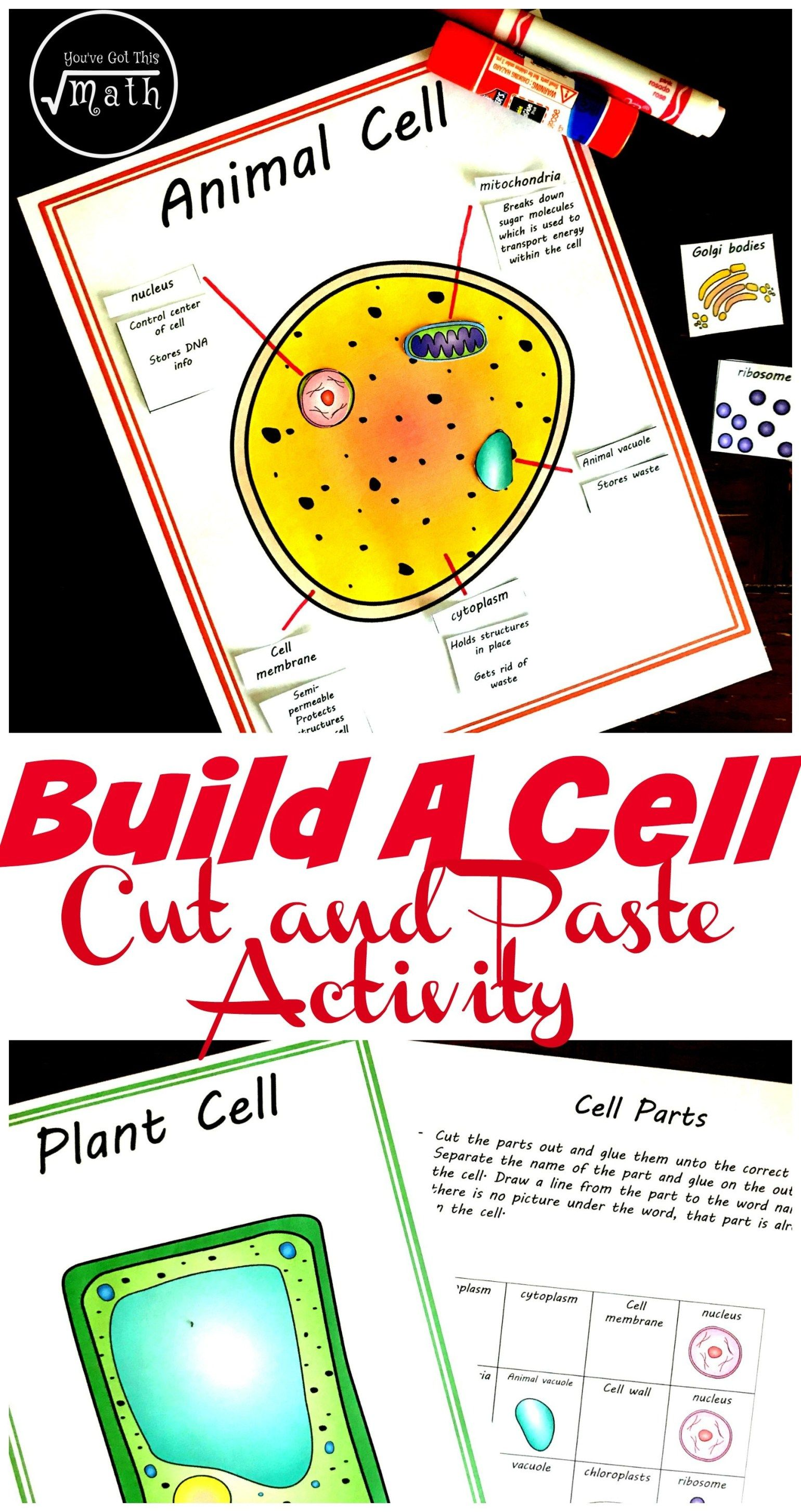 Free Cut And Paste Animal And Plant Cell Worksheet