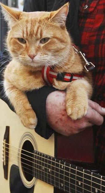 Bob streetcat Street cat bob, Cat names, Cats and kittens