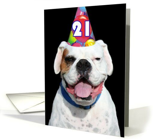 21st Birthday Party Invitaiton Boxer Card Customize Inside Text Boxers Invitations Dog Pet Animals