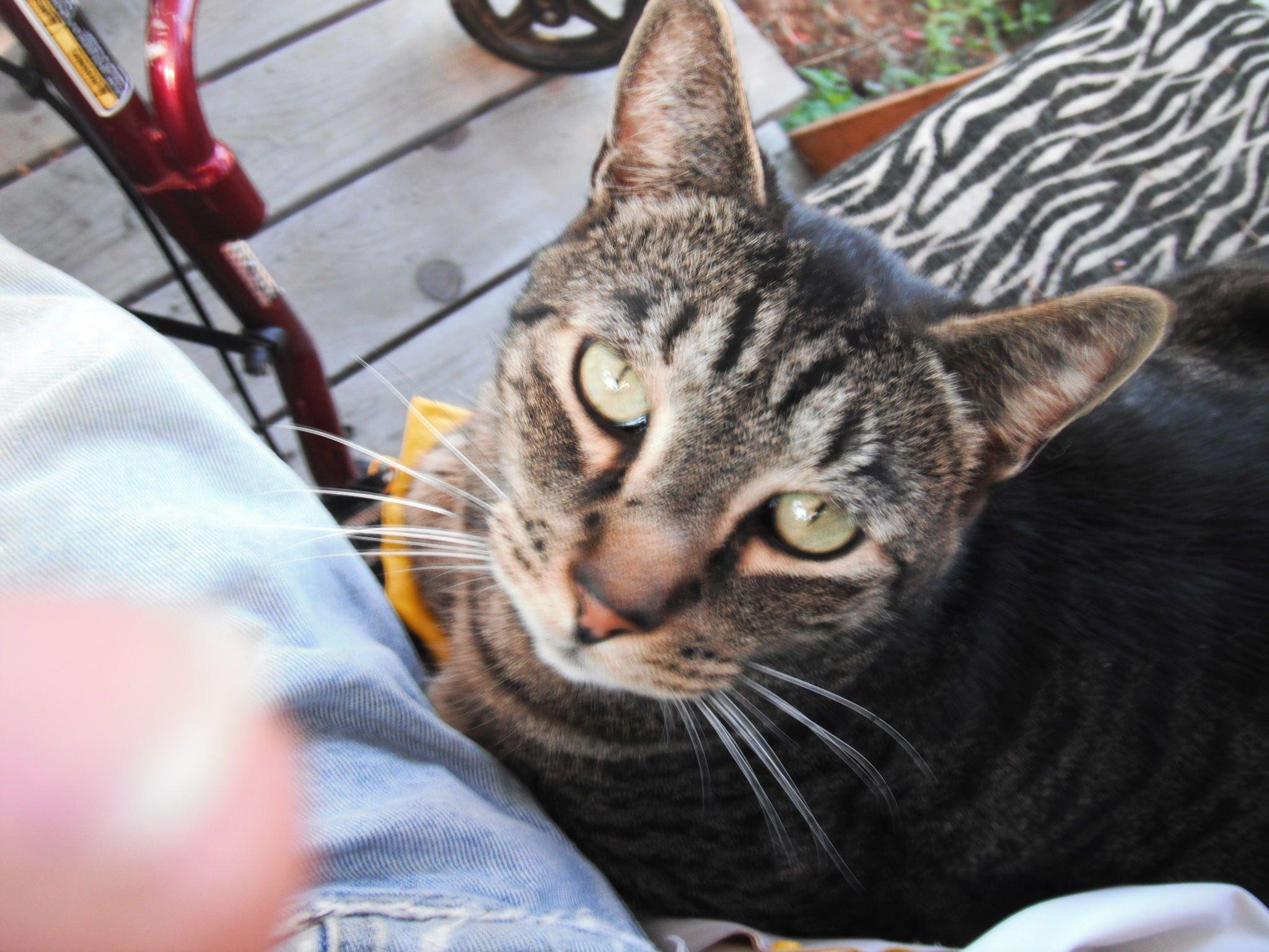 18++ Linn county animal shelter images