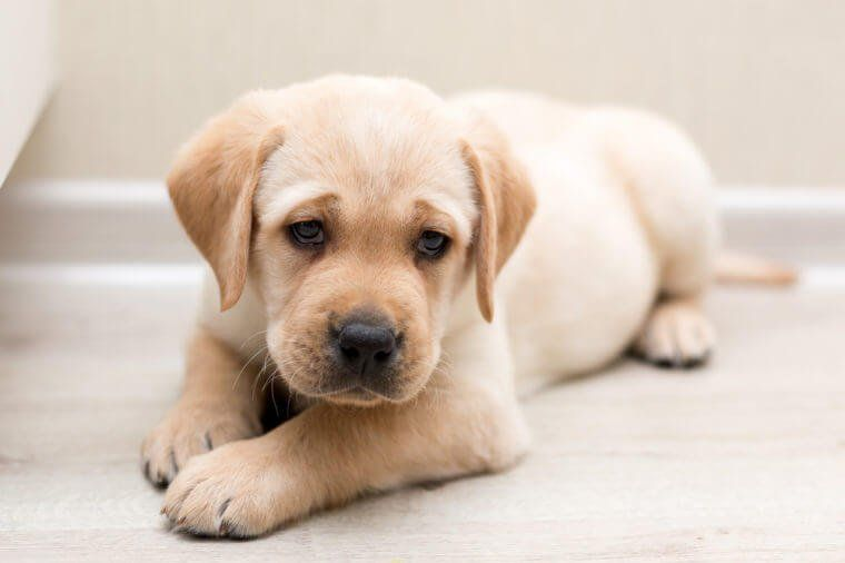 These Are The Most Popular Dog Breeds In Every State Popular Dog