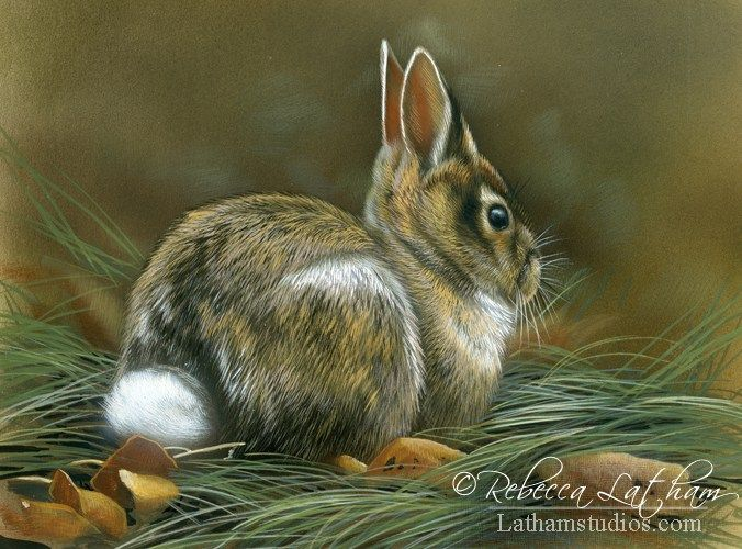 rabbit, 5in x 7in, opaque and transparent watercolor with sterling silver on board, ©Rebecca Latham