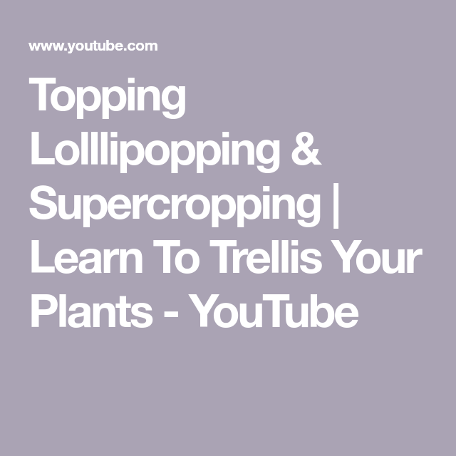 Topping Lolllipopping & Supercropping | Learn To Trellis Your Plants - YouTube
