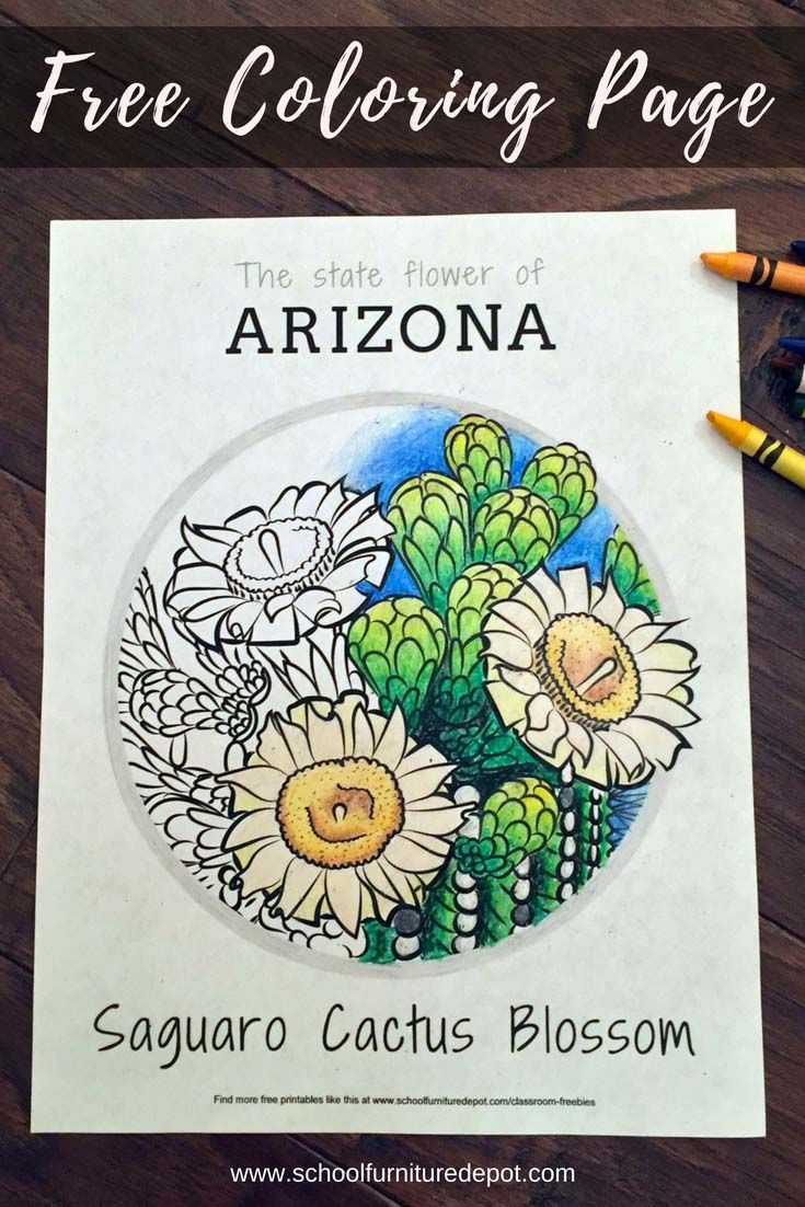 State Flower Coloring Pages | Flower and Free