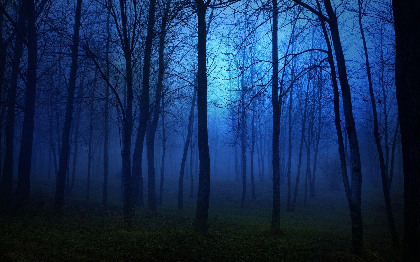 Forest Night Wallpaper...