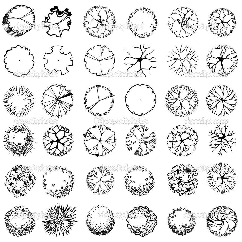 Tree Plan Drawing Vector Illustration Of Tree