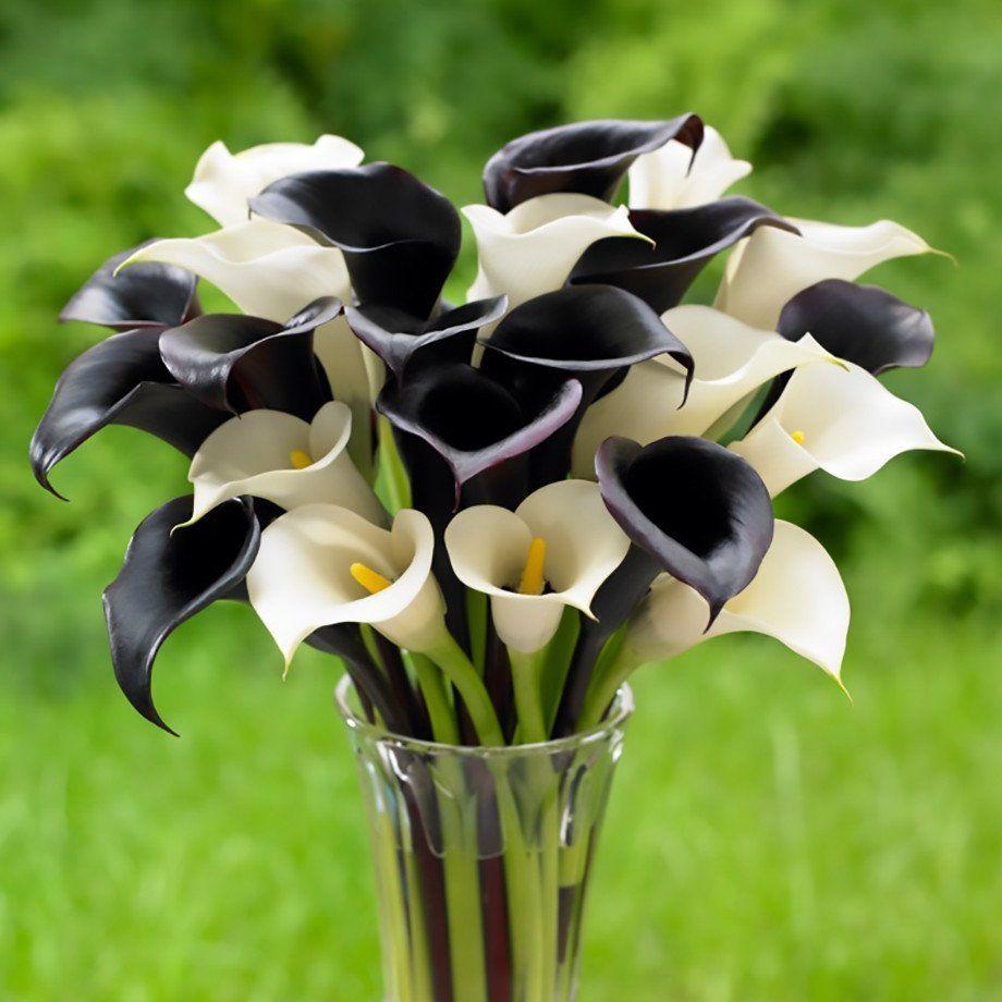 Calla tuxedo collection bulbs gardens and white gardens calla tuxedo collection izmirmasajfo