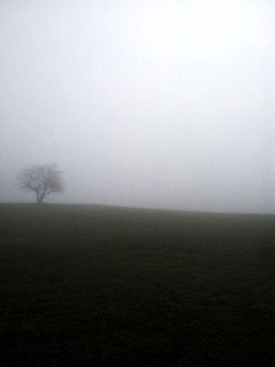 Foggy Photography 10
