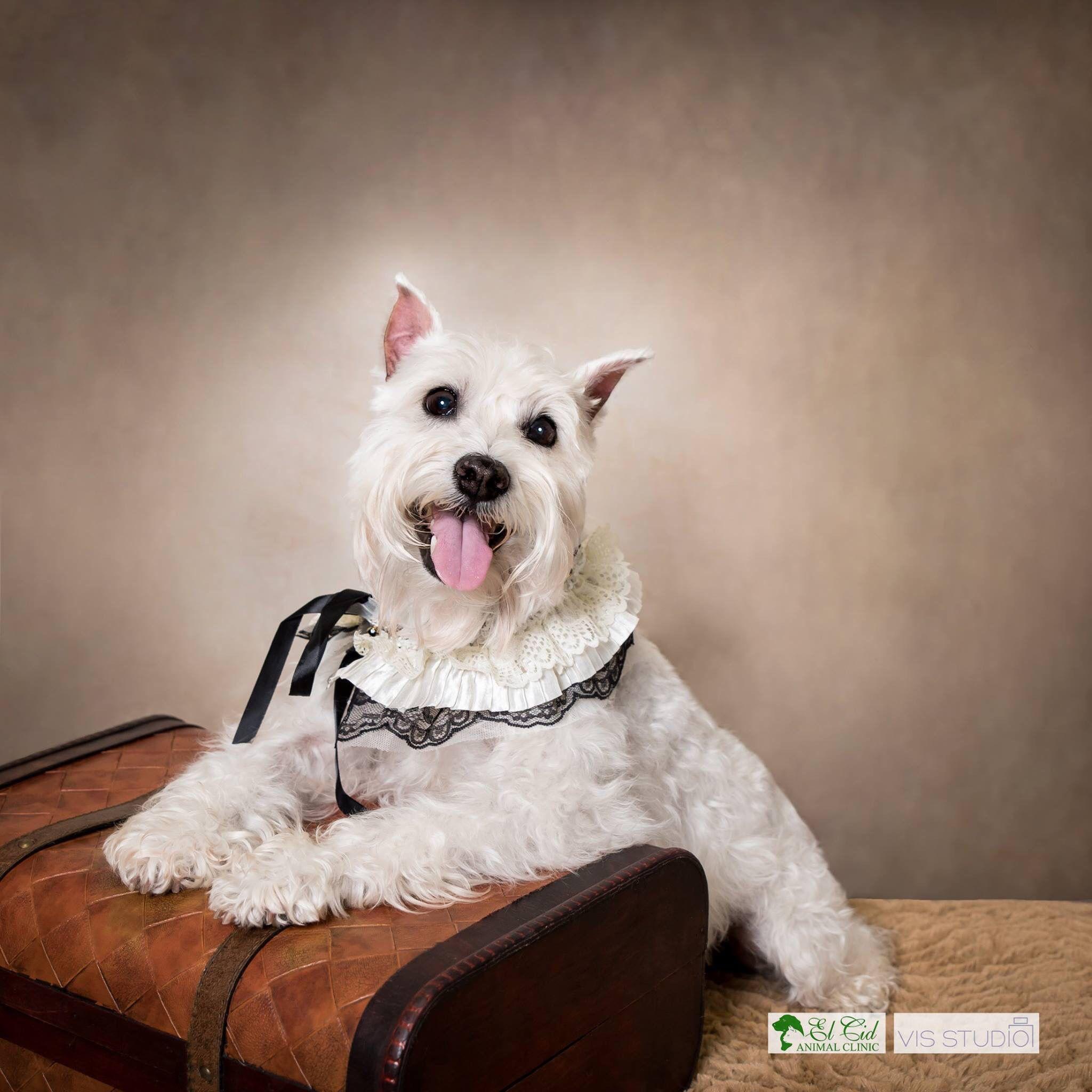 El Cid Animal Clinic Pet Photographer Pet Photography Dog Photographer Dog Photos Dog Photography Palm Beach Animal Photography Dog Photos Dog Photograph