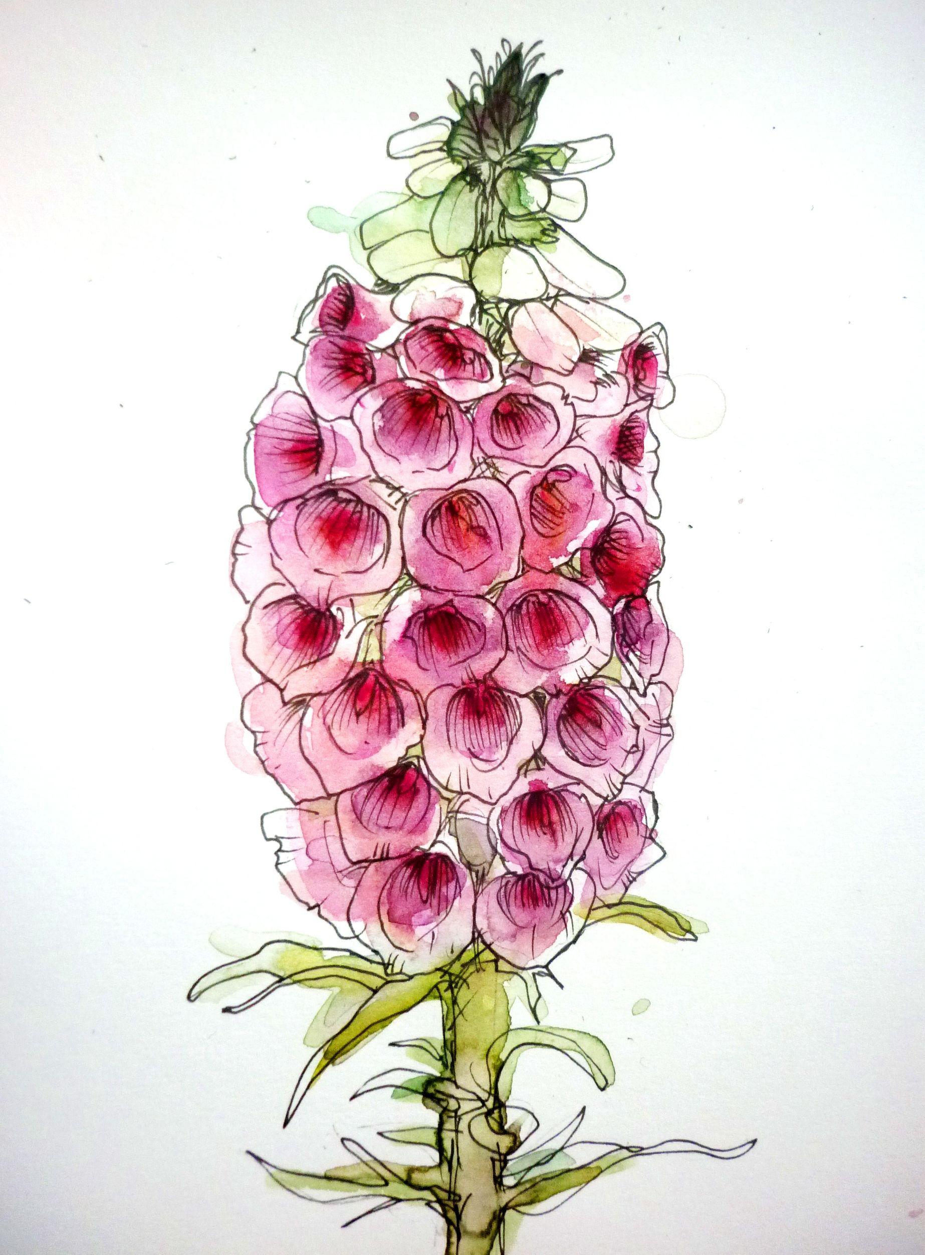 Foxglove Flower Watercolour Flower Art Flower Drawing Flower